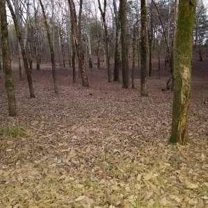 Steve H.'s Land primitive Campg