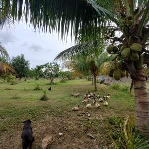 Mashav's Goats and Duccks Land