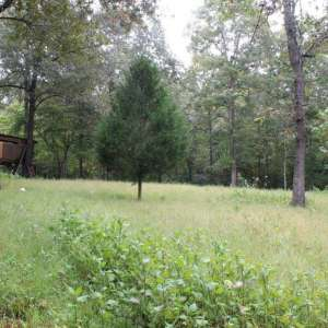 Spring River Cabins and Camping