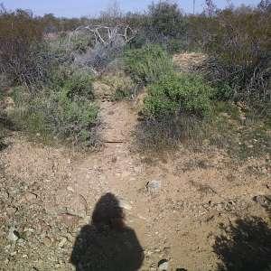 Mary Bernardin's Land
