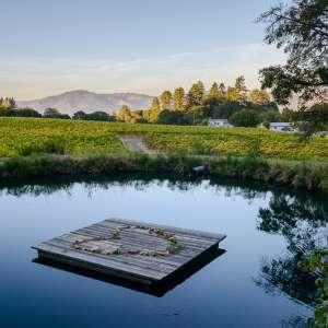 Sonoma Mountain Serenity