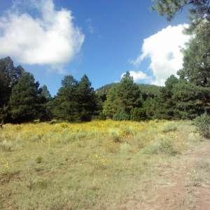 Wifflebird Ranch