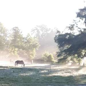 North FL Equestrian Short Stay