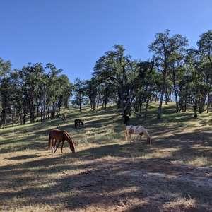 Ascension Ranch