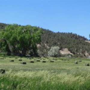 Linda M.'s Santa Rita Ranch