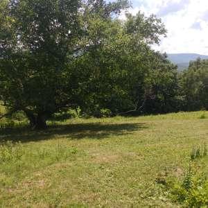 Timbertrail Farm