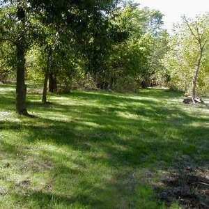Fangthorn Forest