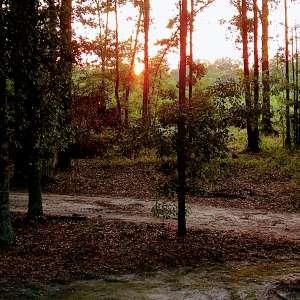 Lorine W.'s Land