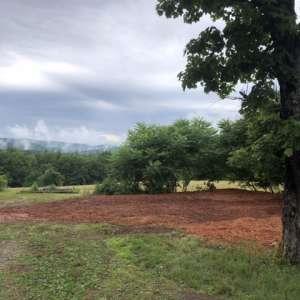 Roy M.'s Land