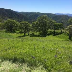 Sarah W.'s Land