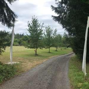 Rowan D.'s Land