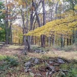 Douglas  T.'s Land