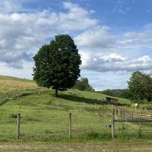 Ashley S.'s Land