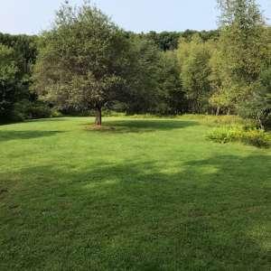 Delia  A.'s Land