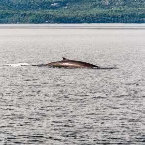 Saguenay–St. Lawrence Marine Park