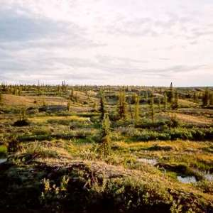 Tuktut Nogait National Park