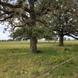 Virginia M.'s Land