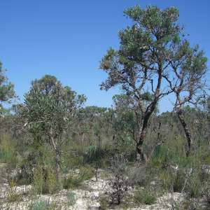 Moore River National Park