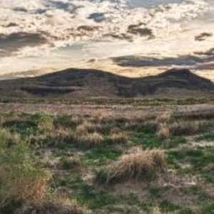 Celena  R.'s Land