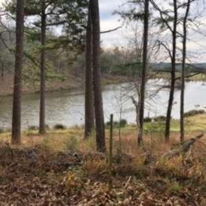 Donna M.'s Land