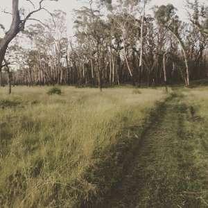 Greg C.'s Land