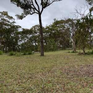Ironbark Ranch - Mangrove Mt