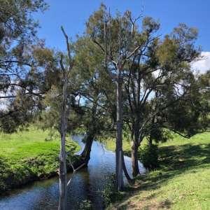 Wonga Creek Retreat at Hiawatha