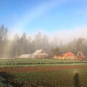 SunSpirit Farm