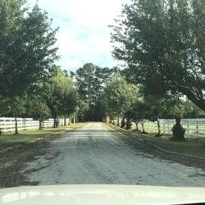 Liz J's Farm