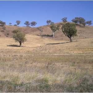 Leigh P.'s Land
