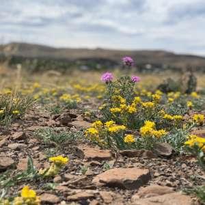 Desert Mountain Oasis