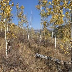 Geoffrey  M.'s Land