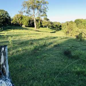Cyd C.'s Land
