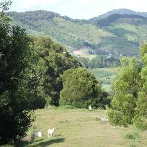 Susan K.'s Land