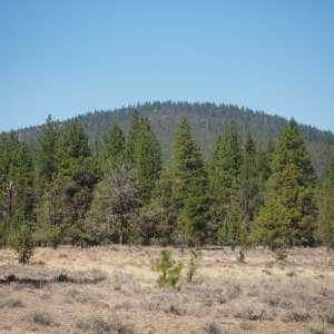Oak Ring Ridge