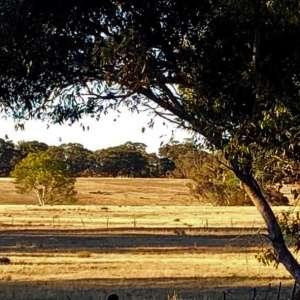 Judith M.'s Land