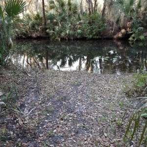 Sandy's Swamp land of Florida