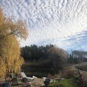 Willow P.'s Land