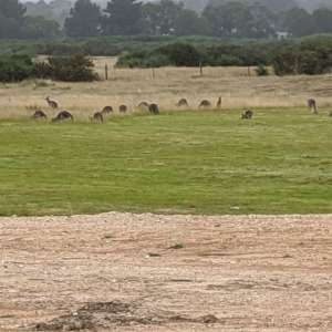 Farm Stay near Ballarat