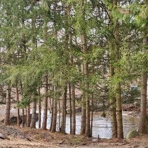 Rebecca P.'s Land