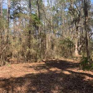 Caesar oaks campground