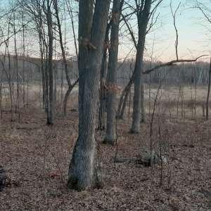Wade  A.'s Land