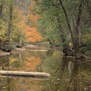 Buck Creek Sanctuary