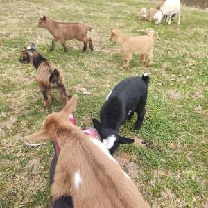 Surry Hills Farm