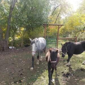 Lux-Crete Ranch Lodging