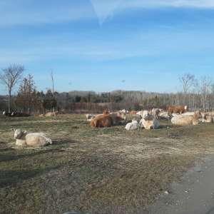 Hickory Dickory Farm Camp