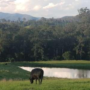 Wonnarrua Farm Camp