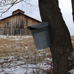 Scenic Mapleland Farms