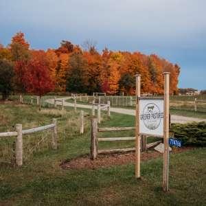 Carl V.'s Land