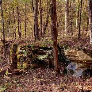 Brian N.'s Land